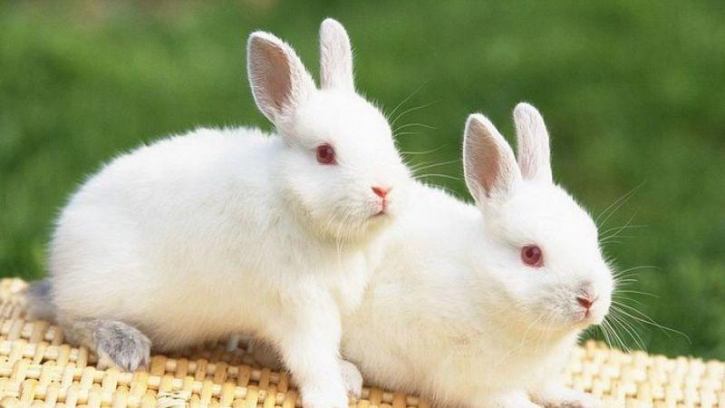 , México se suma a los 40 países que prohíben las pruebas en animales para cosméticos