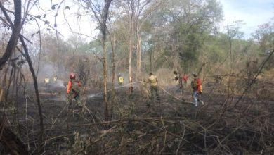 Photo of Kebakaran Hutan di KM 45 Arah Bekol, 20 Petugas Taman NasionalBaluran Diterjunkan