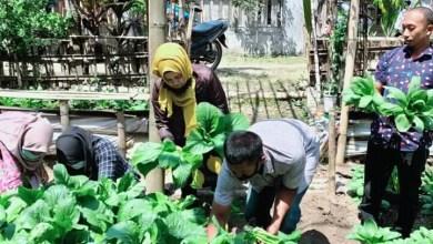 Photo of Geliat Urban Farming di Kota Malang