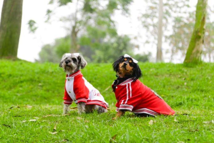 Jornada comenzará con charlas informativas a cargo de especialistas en el tema de animales. En el club zonal Huáscar, Diana Ramos, de la gerencia de Desarrollo Social de la Municipalidad de Lima, dará una ponencia sobre cuidados y tenencia responsable de las mascotas. ANDINA/ Municipalidad de Lima