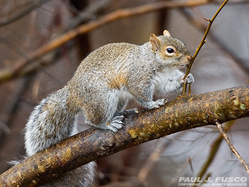 A squirrel standing on a branch  Description automatically generated
