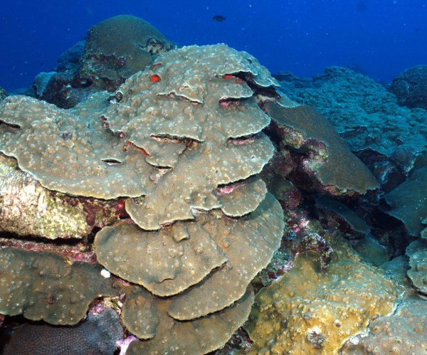 Causes of Coral Reef Decline