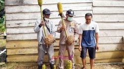Karantina Kendari Ajak Kabupaten Konawe Kepulauan Ekspor Porang