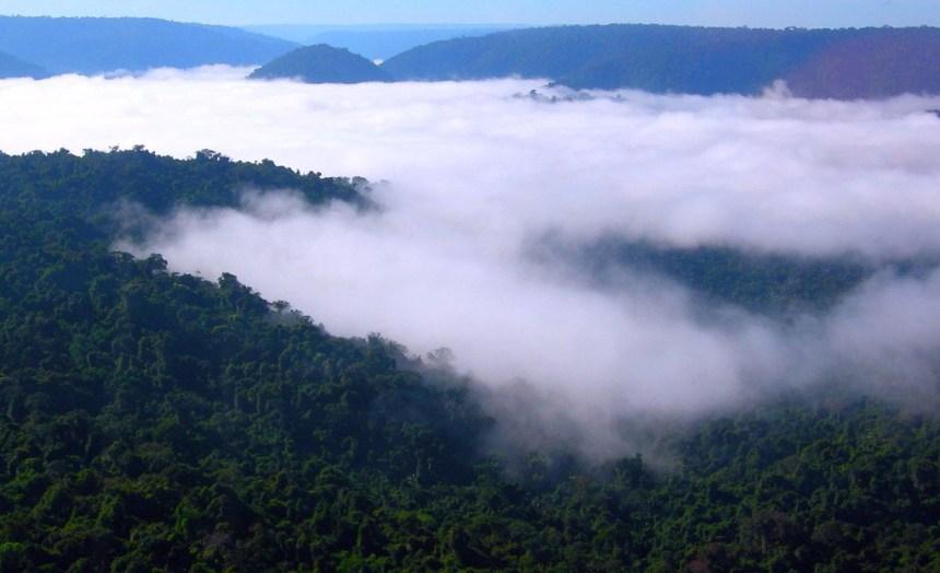 O que está em jogo na Amazônia