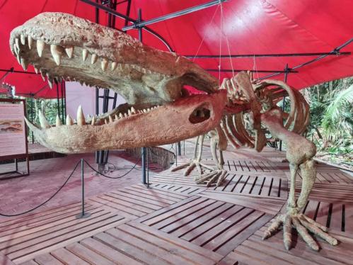 Clube Recomenda: Exposição do Museu da Amazônia, em Manaus
