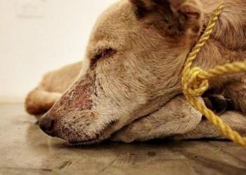 maus tratos animais