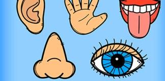 los 5 sentidos para colorear