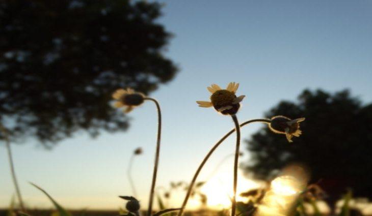 Domingo com períodos de sol e ar abafado em Mato Grosso do Sul