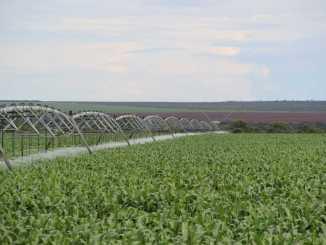 Desenvolvimento agrícola no Oeste da Bahia.
