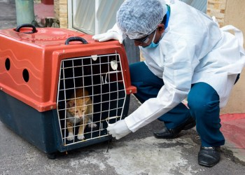 Prefeitura orienta população sobre cuidados no manejo de animais com doença esporotricose