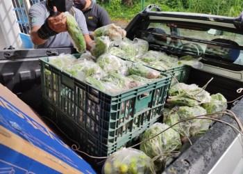 Hortaliças cultivadas no sistema prisional são doadas para instituições de caridade de Manaus