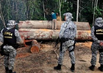 Governo diz que desmatamento na Amazônia teve queda de 70% em janeiro