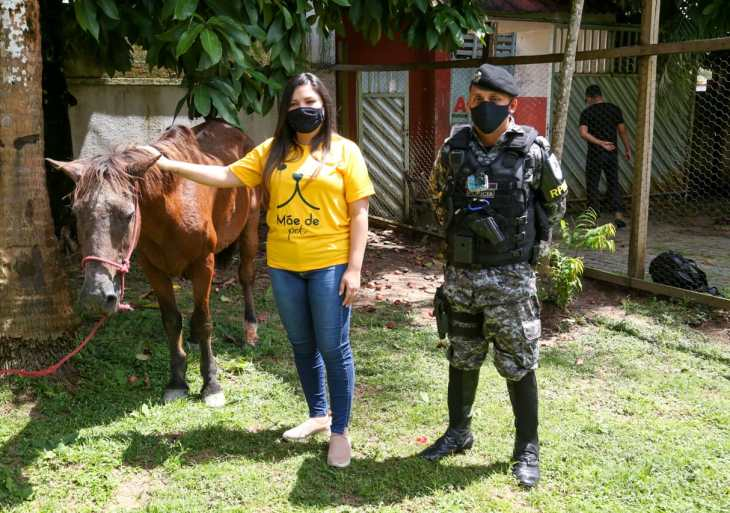 PM auxilia em resgate de cavalo vítima de maus-tratos no Careiro da Várzea