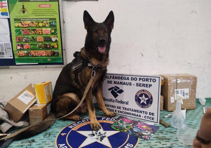 Receita Federal em Manaus encontra drogas nos Correios