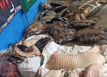 Polícia Militar apreende carnes ilegais de animais da fauna silvestre em Manacapuru