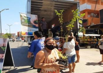 Semmas realiza doação de mais de 3,2 mil mudas de plantas no mês de agosto