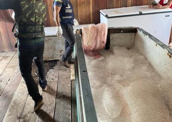 Adaf apreende 370 quilos de peixes em Manacapuru
