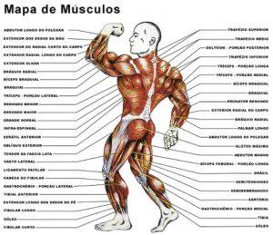 imagens-musculos-do-corpo-humano-imagens-2