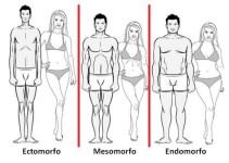 Mesomorfo, Endomorfo e Ectomorfo! Qual é o seu perfil?