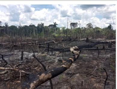 Com desmonte do ICMBio, áreas protegidas da Amazônia têm aumento de queimadas