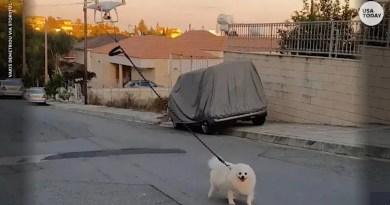 Homem usa drone para levar cão para passear durante quarentena; assista