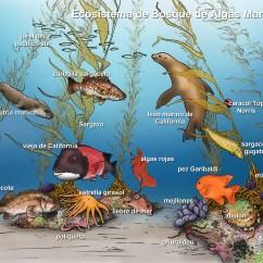 Pacific Ocean Food Web Diagram Simplicity Legacy Wiring Marine Ecosystem Portales 3rd Grade Blog