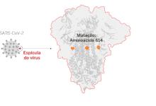 A enigmática mutação do coronavírus que agora domina o planeta 8