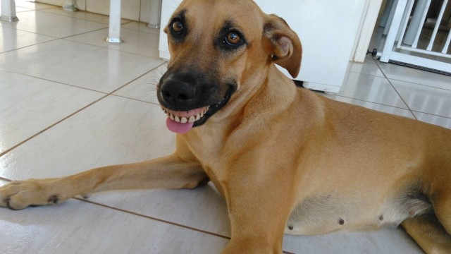 Cachorrinha