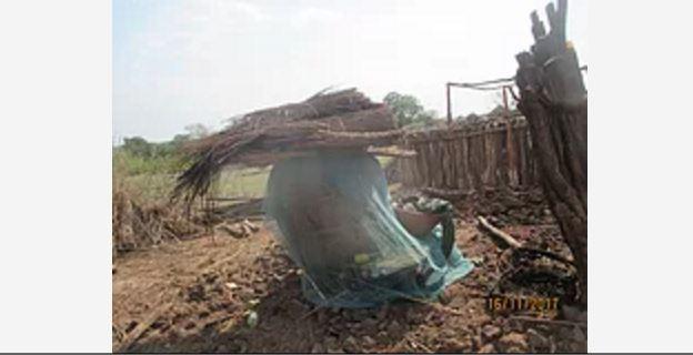 Rede mosquiteira protege celeiro de régulo em Chemba