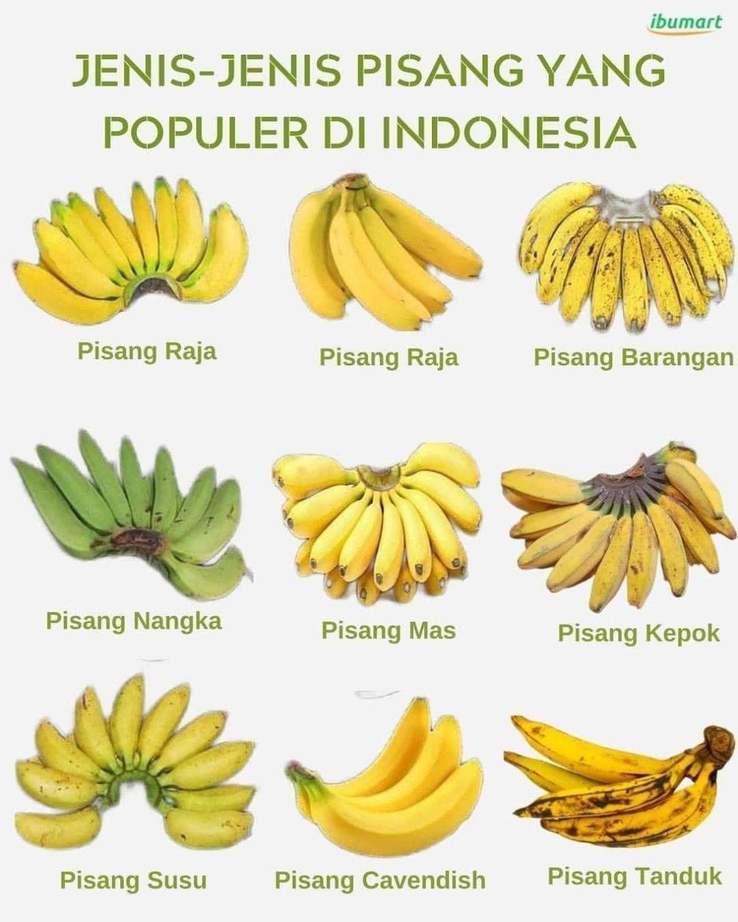 Info sehat, .  Jenis pisang apa yang paling kamu suka?  Siapa yang suka dengan buah pisang??? Seperti y…