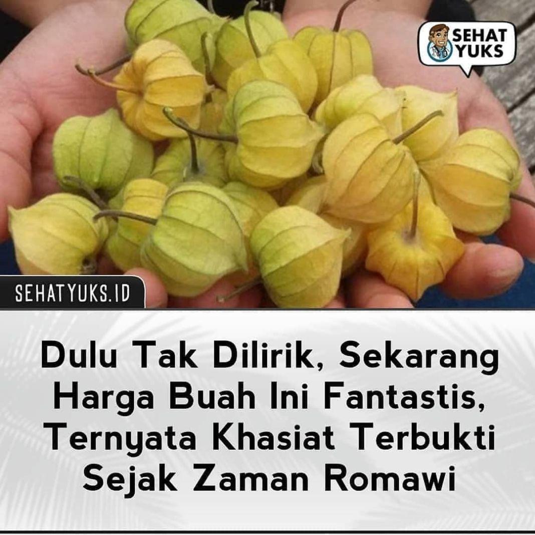 Info sehat, Kalo di daerah kalian namanya buah apa?  Kini buah ceplukan banyak diburu disebabkan harganya sel…