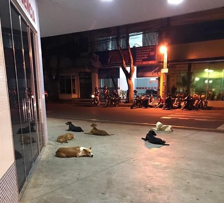 Paraná: Seis cães não saem da porta de hospital à espera de morador de rua