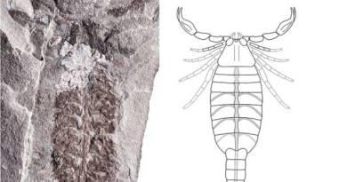 Estudo sugere qual foi o primeiro animal terrestre da história
