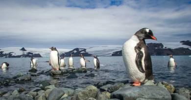 VEJA na Antártica: imagens mostram a expedição ao mais inóspito continente