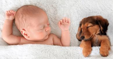 Animais de estimação fazem mal à saúde dos bebês?