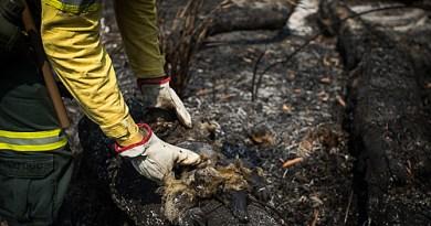 Quais são os tipos de queimadas ilegais utilizadas pelo agronegócio na Amazônia