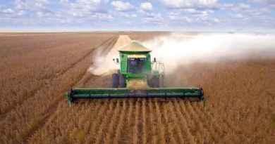 IBGE prevê safra recorde de 252 milhões de toneladas de grãos em 2020   BizNews Brasil :: Notícias de Fusões e Aquisições de empresas