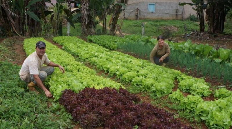 Dos eleitos, 47 prefeitos e 125 vereadores têm compromisso com a agroecologia