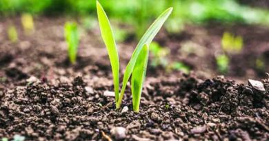 O que é a agricultura regenerativa — e por que a Danone investiu nisso   BizNews Brasil :: Notícias de Fusões e Aquisições de empresas