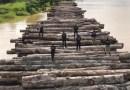 Juíza determina que PF devolva madeira ilegal apreendida na Operação Handroanthus