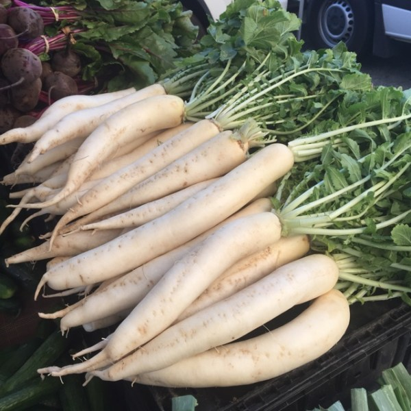 Daikon Radish Information Recipes and Facts