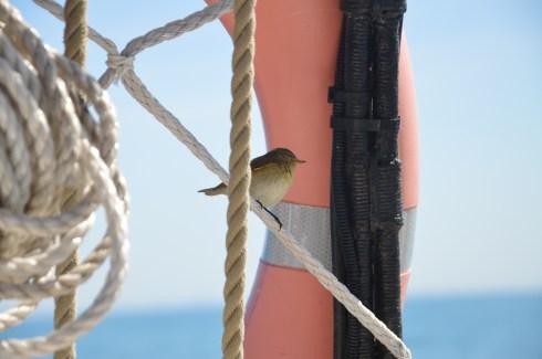 Oiseau à bord du bateau de transport à voile