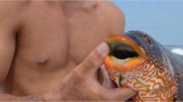 Dents de notre poisson pêché aux Glénan
