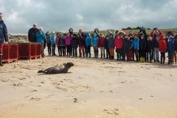 Devant les jeunes élèves de CM1, les phoques prennent la route vers la mer !