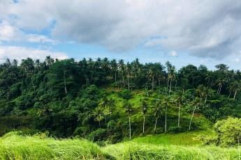 La jungle de Ubud à Bali