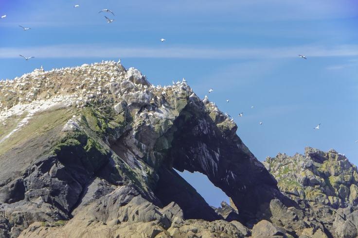 Croisière dans l'archipel des sept îles à Perros Guirec