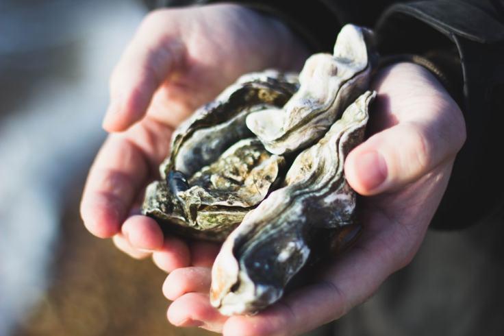 Dégustation d'huîtres à Arradon : chez Jegat, on magnifie ce qui provient de la mer.