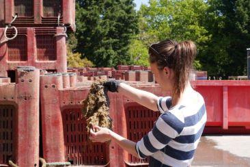 Lucie Mandras récupère le byssus de moules chez le mytiliculteur