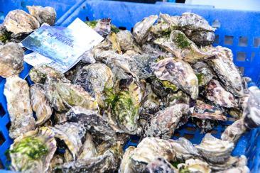 Huîtres du cap Fréhel, pêche fraîche !