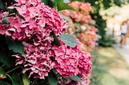 Le mot fleur est un bel exemple de V muet, qu'il ne faut pas prononcer.